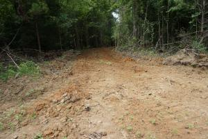 The Boligee Tombigbee River Timber & Hunting Investment in Greene, AL (31 of 49)