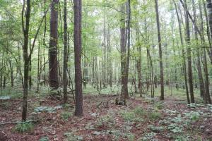 The Boligee Tombigbee River Timber & Hunting Investment in Greene, AL (5 of 49)