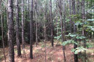 Choctaw 40 Homesite - Choctaw County MS