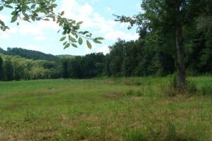 Recreational land and home on 40 acres in Cleburne, AR (15 of 42)