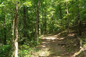 Recreational land and home on 40 acres in Cleburne, AR (24 of 42)