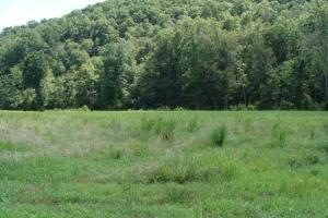 Pasture land for hay or a food plot for wildlife to enjoy (7 of 42)