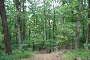 Recreational land and home on 40 acres in Cleburne, AR (20 of 42)