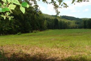 Recreational land and home on 40 acres in Cleburne, AR (16 of 42)