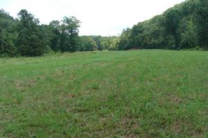Recreational land and home on 40 acres in Cleburne, AR (9 of 42)