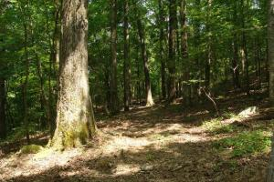 Recreational land and home on 40 acres in Cleburne, AR (25 of 42)