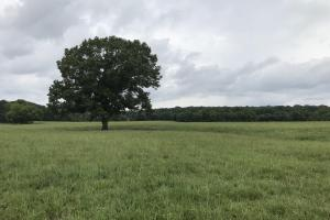XL mature oak tree in pasture (1 of 40)