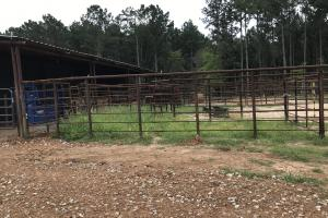 cattle pens (39 of 40)