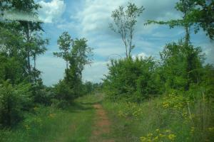 39 AC Hunting/Recreational Tract