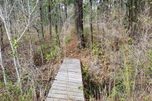 Pender 70 Acres Hunting Land - Pender County, NC
