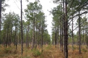 Pender 50 Acres Hunting Land in Pender, NC (2 of 8)