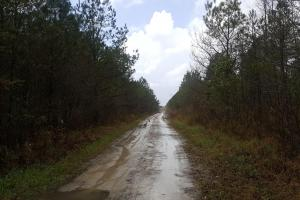 Loblolly Pine Plantation Hunting Land