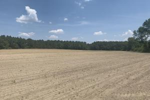 The Boggy Branch Farmland and Hunting Tract in Holmes, FL (6 of 35)
