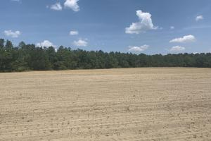 The Boggy Branch Farmland and Hunting Tract in Holmes, FL (7 of 35)