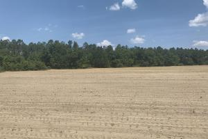 The Boggy Branch Farmland and Hunting Tract in Holmes, FL (5 of 35)