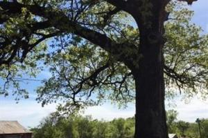 80 Acres 4060 Road - McIntosh County OK