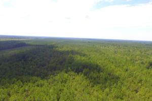 General Howe Hunting and Timber Land - Columbus County, NC