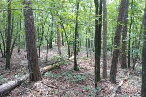 6 Wooded Acres with Utilities Close to Hot Springs in Garland, AR (9 of 19)