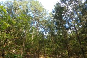 6 Wooded Acres with Utilities Close to Hot Springs in Garland, AR (5 of 19)