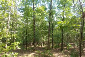 6 Wooded Acres with Utilities Close to Hot Springs in Garland, AR (14 of 19)