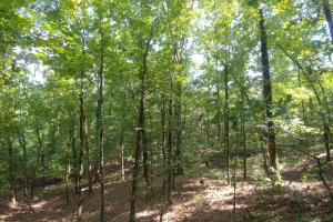 6 Wooded Acres with Utilities Close to Hot Springs in Garland, AR (15 of 19)