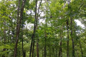 6 Wooded Acres with Utilities Close to Hot Springs in Garland, AR (11 of 19)