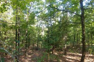 6 Wooded Acres with Utilities Close to Hot Springs in Garland, AR (16 of 19)