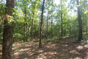 6 Wooded Acres with Utilities Close to Hot Springs in Garland, AR (17 of 19)