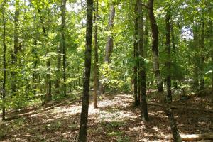 6 Wooded Acres with Utilities Close to Hot Springs in Garland, AR (8 of 19)