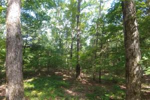 6 Wooded Acres with Utilities Close to Hot Springs in Garland, AR (18 of 19)