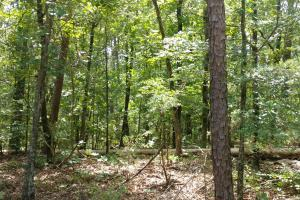 6 Wooded Acres with Utilities Close to Hot Springs in Garland, AR (6 of 19)