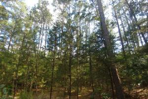 6 Wooded Acres with Utilities Close to Hot Springs in Garland, AR (3 of 19)