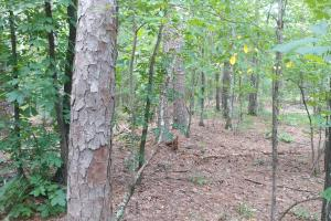 6 Wooded Acres with Utilities Close to Hot Springs in Garland, AR (10 of 19)