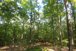 6 Wooded Acres with Utilities Close to Hot Springs in Garland, AR (19 of 19)