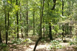 6 Wooded Acres with Utilities Close to Hot Springs in Garland, AR (7 of 19)
