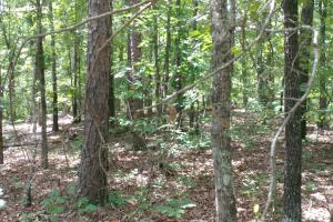 6 Wooded Acres with Utilities Close to Hot Springs in Garland, AR (4 of 19)