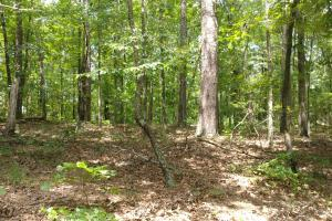 6 Wooded Acres with Utilities Close to Hot Springs in Garland, AR (13 of 19)