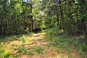Alta Recreation and Timber Investment Property in Fayette, AL (13 of 18)