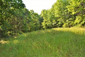 Alta Recreation and Timber Investment Property in Fayette, AL (2 of 18)
