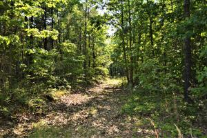 Alta Recreation and Timber Investment Property in Fayette, AL (17 of 18)