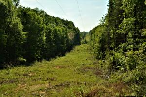 Powerline ROW provides additional food plot opportunities. (6 of 18)
