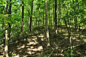 Alta Recreation and Timber Investment Property in Fayette, AL (10 of 18)