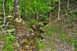 Small stream with hardwood timber (3 of 18)