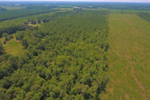 264 Timber Tract in Greene, NC (1 of 4)