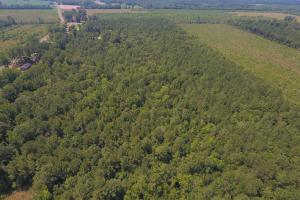 264 Timber Tract in Greene, NC (2 of 4)