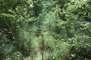 The regenerated areas provide great cover for deer. (17 of 21)