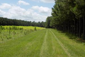 Salkehatchie Preserve High Fence Tract in Bamberg, SC (41 of 46)