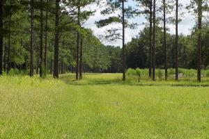 Salkehatchie Preserve High Fence Tract in Bamberg, SC (31 of 46)