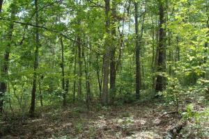 160 Acre Ozark Mountain Waterfall Hunting Tract in Stone, AR (25 of 49)