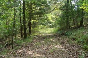 160 Acre Ozark Mountain Waterfall Hunting Tract in Stone, AR (15 of 49)